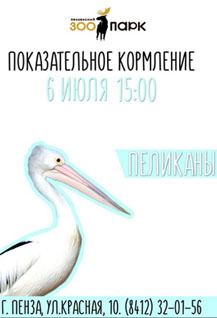 Показательное кормление пеликанов