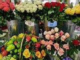 Тюльпан, салон-магазин
