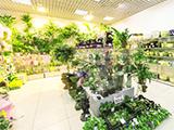 Диантус на Дзержинского, цветочный магазин