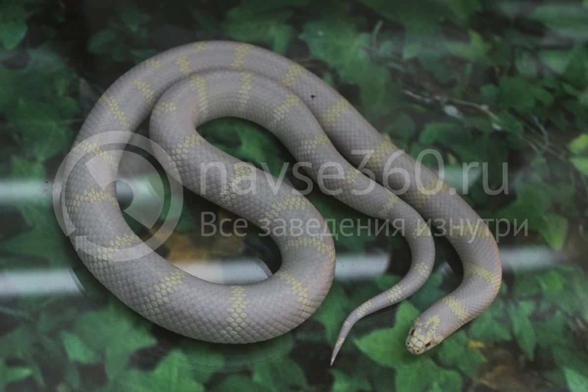 змея в зоопарке